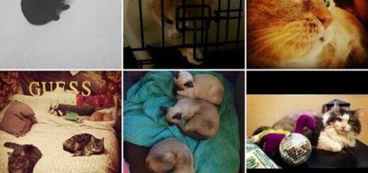 Instagram Hashtag Animali